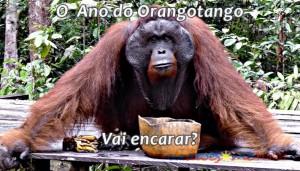 ano_orangotango (1)